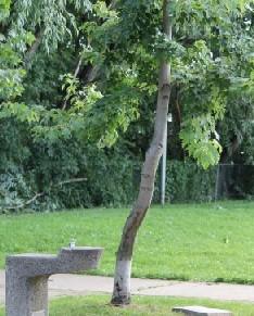 tree3_jpg_size_xxlarge_letterbox.jpg